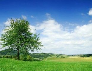 landscape - lonely tree on the field, the blue sky and white clouds