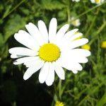 Fleurs Potager - Challain-la-Potherie